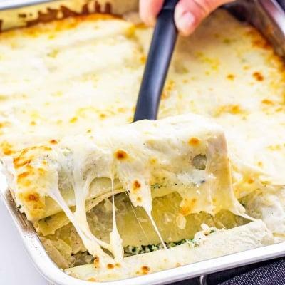Alfredo Lasagna Roll Ups